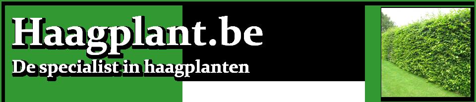 Haagplant.be